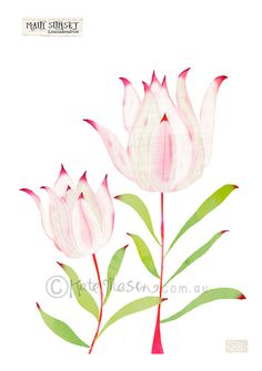 Floral GREETING CARD Australian Leucadendron Flowers