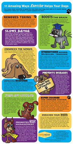 Exercise Infographic - 11 Ways Exercise helps your dog @DogTread Fun.Dog.Fitness by PetZen