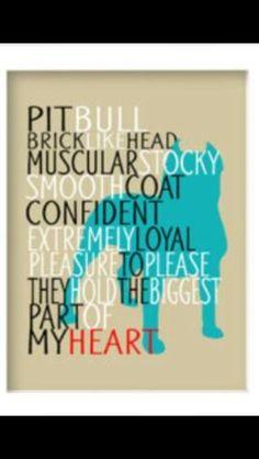 My Pitbull is my heart