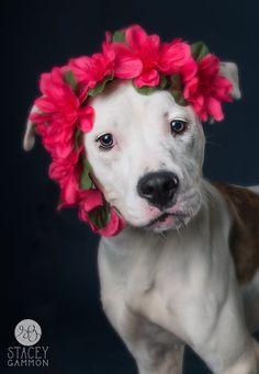 Floral Pitbull Girl