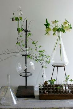 Jolting Tricks: Natural Home Decor Ideas natural home decor paint colors.All Natural Home Decor Lights natural home decor diy tree stumps.Natural Home Decor Inspiration Coffee Tables. Gardening For Beginners, Gardening Tips, Indoor Gardening, Urban Gardening, Deco Floral, Floral Design, Graphic Design, Natural Home Decor, Blog Deco