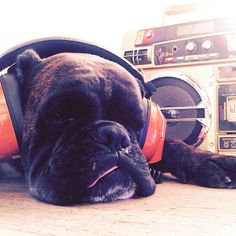 """When I'm sick of listening to all that bullshits of mankind I just turn my radio on""  #music #dog #80s #mood #instamood #me #photography #contrestyle #cute #cool #instacool #ootd #likeforfollow #fashion #fashiongram #style #love #beautiful #fashionista #instastyle #instafashion #contreboutiques"