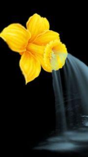 Yellow Flower screenshot #1