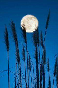 moon/grass