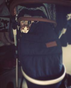 #cat #stroller #boss #nothingmore #nothingless