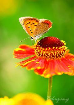 #butterfly #flower