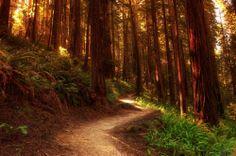 Laden Sie das Bild auf Ihrem Desktop mit erstaunlichen freundlich Wald an Wunder gehüllt.
