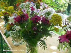 Trajnice za rezano cvetje