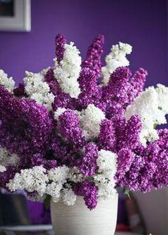 Lilac floral arrangement (with purple walls. My Flower, Fresh Flowers, Purple Flowers, Beautiful Flowers, Purple Lilac, Spring Flowers, White Flowers, Lilac Tree, Purple Peonies