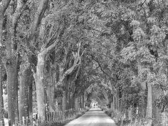 Bomenlaan zwart-wit - foto Donnie Greve