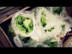 Hydroponic Billboard Grows Thousands of Lettuce Heads Each Week - http://www.psfk.com/2015/04/hydroponic-billboard-air-orchard-peru.html