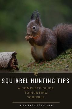 How to Hunt Squirrel: 13 Hunting Tips (Best Times, Guns, & More) Squirrel hunting is an American Past time, and something that hunters of all ages can enjoy. This complete guide will help you ensure you have all the tips you need for your next expedition. Squirrel Hunting, Deer Hunting Tips, Hunting Gear, Hunting Stuff, Squirrel Calls, Hunting Humor, Hunting Season, Crossbow Hunting, Archery Hunting