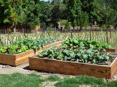 building garden boxes   ... Vegetable Garden - How To Build A Raised Bed Vegetable Garden Box