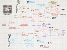 La Chuleta de Osler: Neurología: Sisterma nervioso autónomo - Topografía