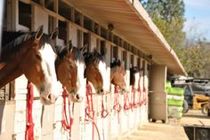 Equestfest presented by Wells Fargo for the 2015 Rose Parade