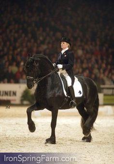 Photo Gallery of Goffert 369 Friesian Stallion Majestic Horse, Beautiful Horses, Animals Beautiful, Magical Creatures, Beautiful Creatures, Friesian Horse, Girls Dream, Dressage, Photo Galleries