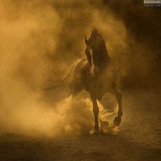 The creation of the Marwari horse from the golden sands of desert... Hukamgarh stud, India