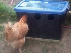 A Chicken Waterer For Chicken Feed