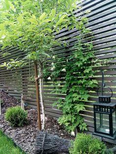 Puutarhauudistuksen suunnittelu ja toteutus Sari Ojala Oy, 2016. Garden Design, Outdoor Structures, Plants, Landscape Designs, Plant, Planets, Yard Design