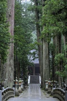 If I ever walk on this path, I would do so in silence and with soft steps; I would not want to disturb the tranquility.(n. cepero)   Mt. Koya, Japan