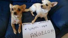 """Cane Angelo, Enpa: """"Vigilare sull'attività di volontariato richiesta ai quattro"""" :http://www.qualazampa.news/2017/05/26/cane-angelo-enpa-vigilare-sullattivita-di-volontariato-richiesta-ai-quattro/"""