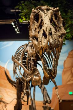 Lehi, UT - Museum of Ancient Life features one of the world's largest displays of mounted dinosaurs with 60 complete dinosaur skeletons, along with more than 50 hands-on exhibits. Be sure to check out the working paleontology lab where workers are unearthing real dinosaur bones. You can even pretend to be a paleontologist yourself in the Junior Paleo Lab by casting your own fossil and drilling a real fish fossil to take home.