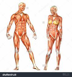Risultati immagini per woman anatomy