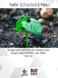 Psalm 96, Plant Leaves, Plants, News Songs, Plant, Planets