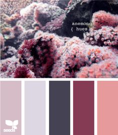 anemone hues - Love this idea of taking a picture to get all the wedding colors