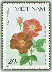 Stamp: Rosa Sp. (Vietnam) (Roses) Mi:VN 1891,Yt:VN 858