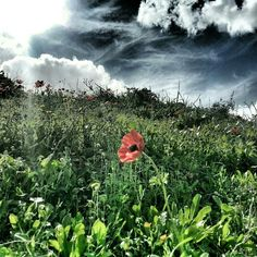 Spring in Israel by Osi Gilboa