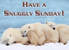 have a snuggly sunday polar bears Good Morning Saturday Images, Happy Saturday Quotes, Saturday Humor, Sunday Images, Weekend Quotes, Happy Sunday, Happy Quotes, Morning Quotes, Morning Hugs