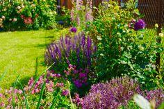 wunderschön zu jeder Jahreszeit, üppig, farbenfroh und auch noch pflegeleicht: ein Bio-Garten im zweiten Jahr Plants, Wonderland, Paradise, Seasons Of The Year, Nice Asses, Plant, Planets
