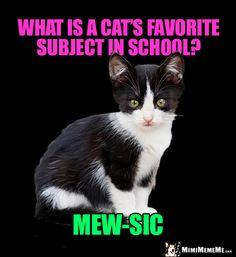 cute cat memes.html