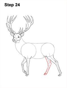 Learn how to draw a Red Deer with this how-to video and step-by-step drawing instructions. Animal Sketches, Animal Drawings, Drawing Sketches, Deer Drawing Easy, Easy Drawings, Drawing Body Proportions, Easy Christmas Drawings, Reindeer Drawing, Winter Drawings