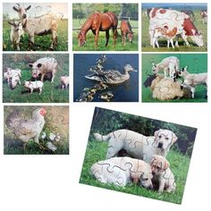 Buy Farm Animals and Their Young Jigsaws from our Science range - Animal Resources - @ Early Years Resources Animals Images, Farm Animals, Puzzles, Sheep, Goats, Real Life, Cow, Lion Sculpture, Challenge