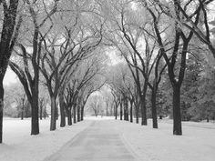 Picture of Winnipeg Manitoba, Canada Winter Scenes stock photo, images and stock photography. Corporate Holiday Cards, Scenery Pictures, Photo Scenery, Winter Trees, Winter Scenery, Winter Art, Winter Snow, Fall Winter, Winter Photos