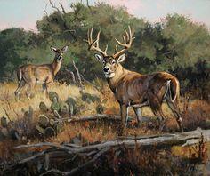 Wildlife Paintings, Wildlife Art, Deer Art, Moose Art, Jackson Hole Wy, Deer Drawing, Deer Pictures, Western Art, Big Game