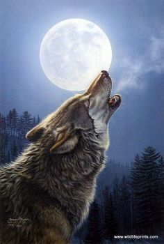 In this beautiful Jame Meger print a lone wolf howls into the full moonlit sky on a cold winter night.