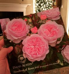 Wow! New roses for 2016