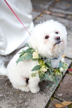We love it when couples include their pet on their wedding day! Look at this dog in his oh-so-chic floral wreath {Arden Photography}