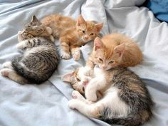 A Bunch of Cute Kittens Lounging About