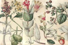 En este Vademécum te proporcionamos el nombre de las principales hierbas y para que sirve cada una de ellas. Las plantas medicinales se han usado desde la mas remota antigüedad como tratamiento para sanar y tratar las enfermedadesde todo tipo.En la actualidad, sus principios activos son los protagonistas de la mayoría de los medicamentos de …