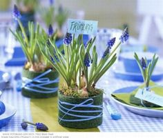 Fresh Periwinkle and Green Color Palette...perfect to plant hyacinths in table decor...or as a favor place card
