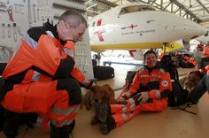 Swiss rescue team Search And Rescue Dogs, Swiss Air, Ambulance, Animals, Animales, Animaux, Animal, Animais