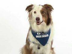 Meet Kip, a member of the Akron Children's Hospital Doggie Brigade.