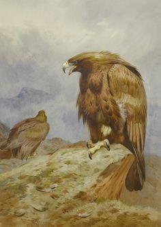 Archibald_Thorburn_Pair_of_Golden_Eagles._Bonhams.jpg (2353×3307)