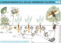 Environmental Studies, Teaching Biology, Nature Study, Map, Learning, Animals, Montessori, Homeschooling, Plants