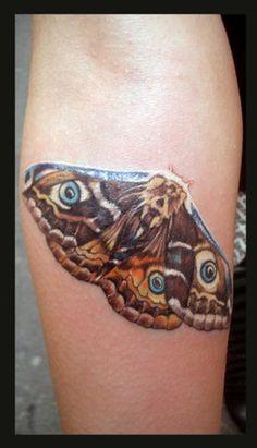 Michele Turco - Moth butterfly night
