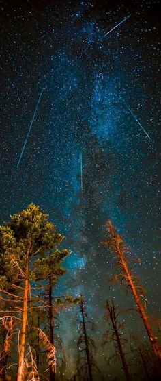 Perseids Meteor Show. The Perseids are a prolific meteor shower associated with the comet Swift-Tuttle. The Perseids are so-called because the point from which they appear to come, called the radiant, lies in the constellation Perseus